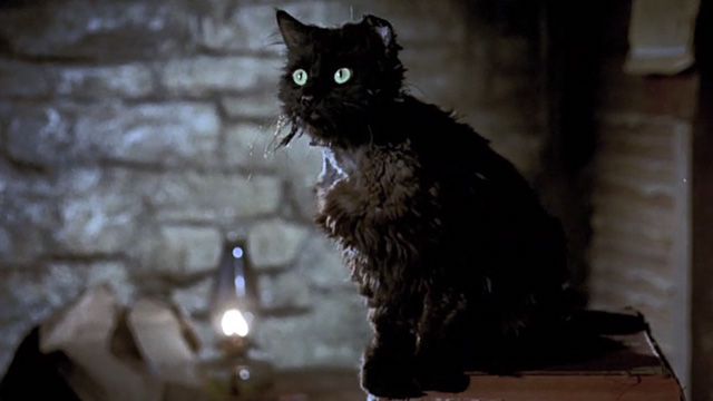 Bedknobs and Broomsticks - ragged black cat Cosmic Creepers sitting on table looking surprised