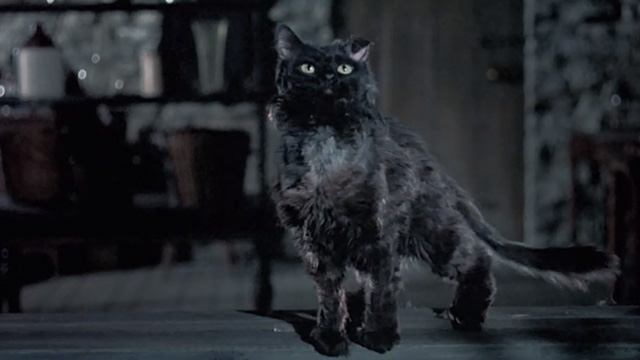Bedknobs and Broomsticks - ragged black cat Cosmic Creepers at window looking up