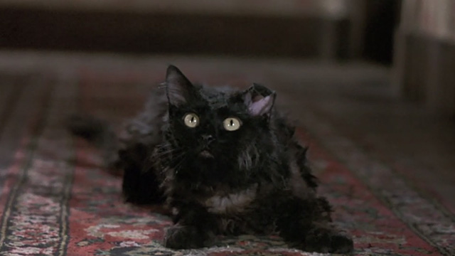 Bedknobs and Broomsticks - ragged black cat Cosmic Creepers looking surprised