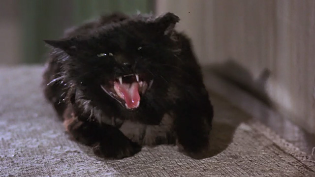 Bedknobs and Broomsticks - ragged black cat Cosmic Creepers hissing