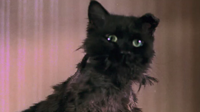 Bedknobs and Broomsticks - ragged black cat Cosmic Creepers looking shocked