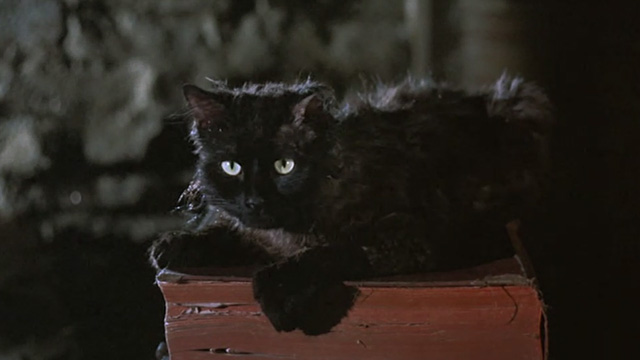 Bedknobs and Broomsticks - ragged black cat Cosmic Creepers on book looking surprised