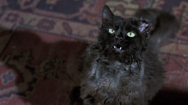 Bedknobs and Broomsticks - ragged black cat Cosmic Creepers looking up and meowing
