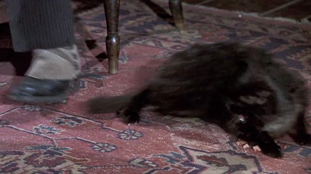 Bedknobs and Broomsticks - ragged black cat Cosmic Creepers runs away when tail is stepped upon