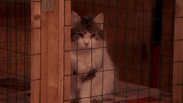 Beethoven's Big Break - multi-colored long-haired cat in cage