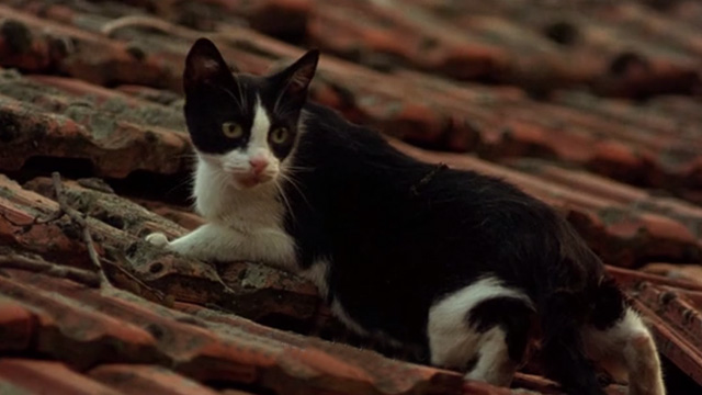 Before the Rain - tuxedo cat on tiled roof