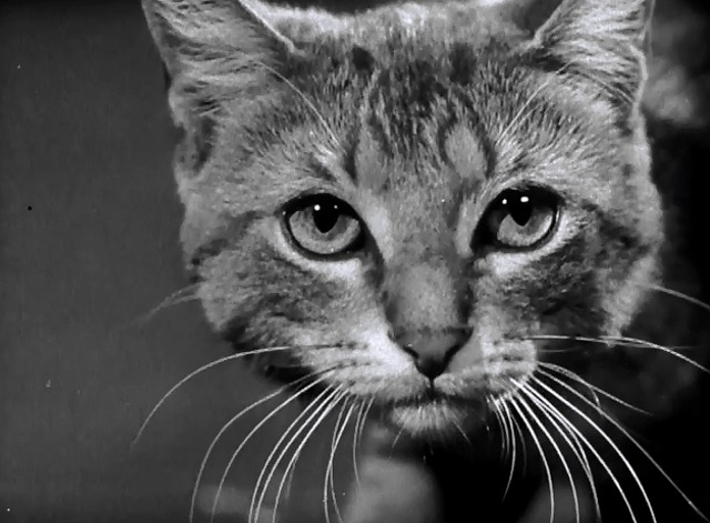Behind the Lens, A Camera Goes to College - tabby cat close up