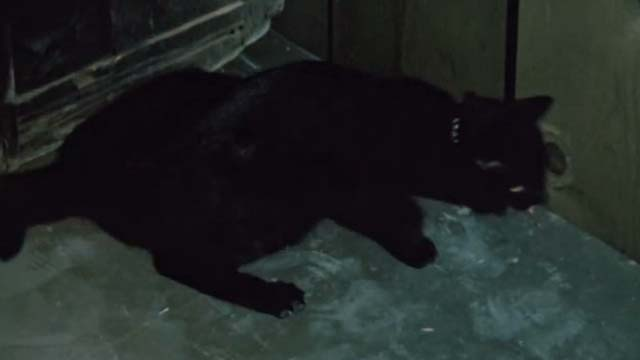 Ben - black cat moving away from crack in wall