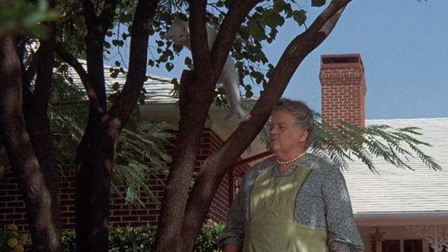 Benji - white cat Sweetie Petey up tree with woman Frances Bavier