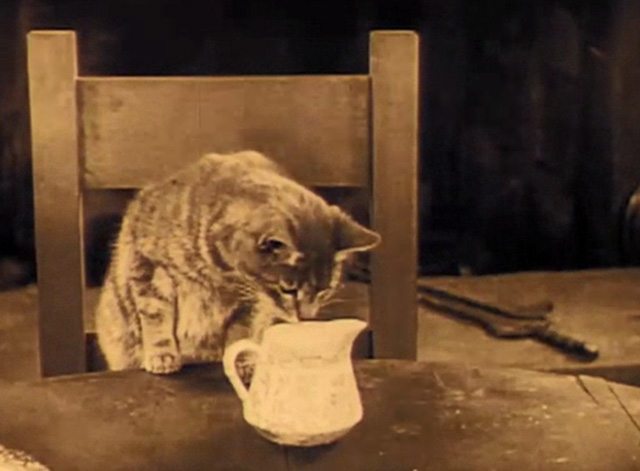 The Better 'Ole - tabby cat looking into cream container on table