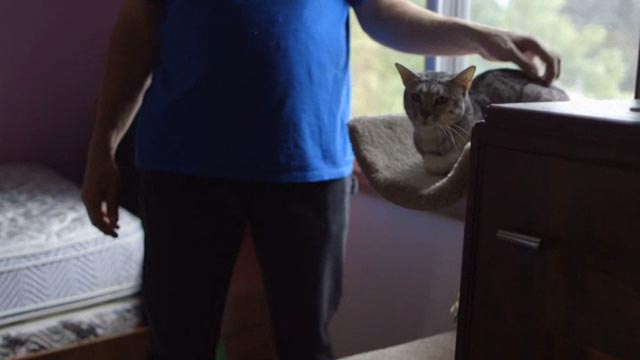 Beware the Slenderman - tabby cat Tiger being petted