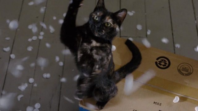 Bewitched - Lucinda tortoiseshell cat batting at packing peanuts