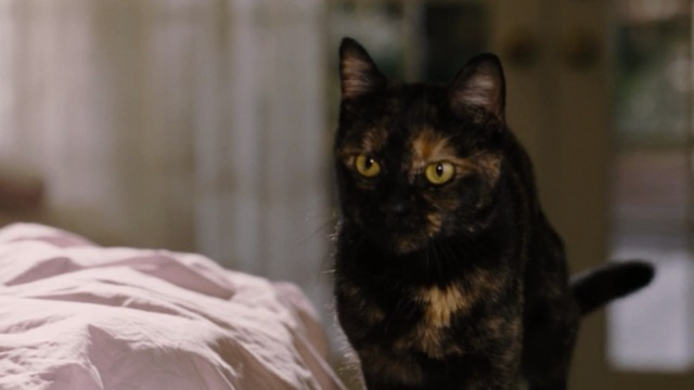 Bewitched - close up of Lucinda tortoiseshell cat