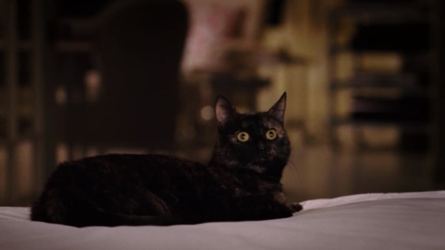 Bewitched - Lucinda tortoiseshell cat sitting on bed