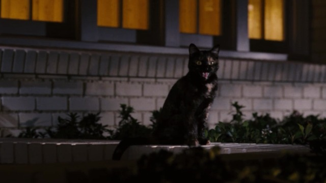 Bewitched - Lucinda tortoiseshell cat meowing
