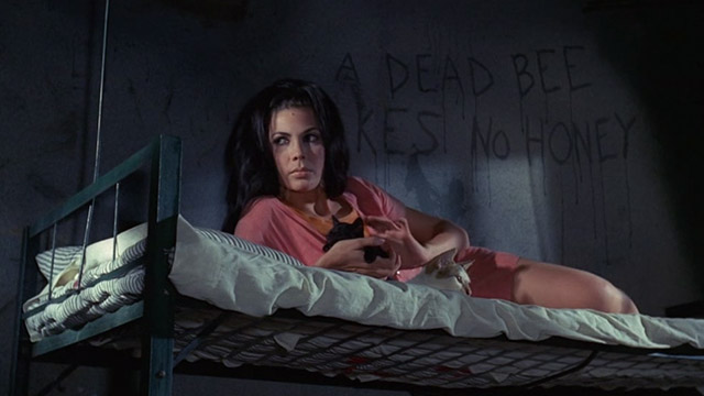 The Big Doll House - Ferina Gina Stuart with black kitten and white and colored cat on bunk