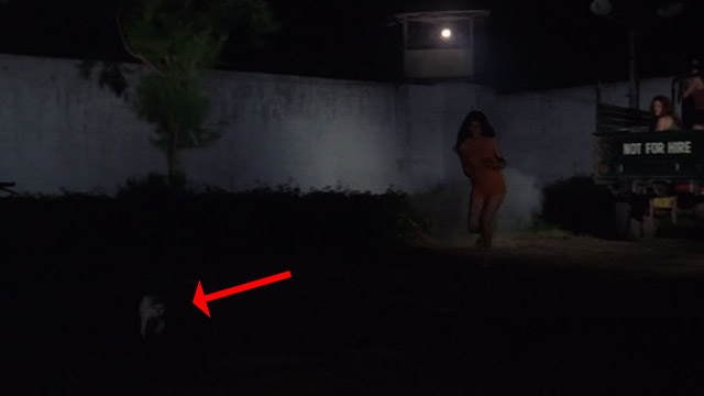 The Big Doll House - Ferina Gina Stuart chasing after white and colored cat across prison yard