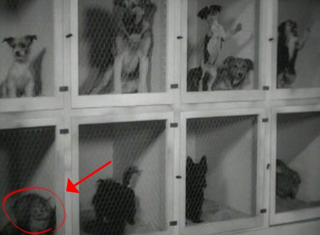 The Big Shot - cat in cage in corner
