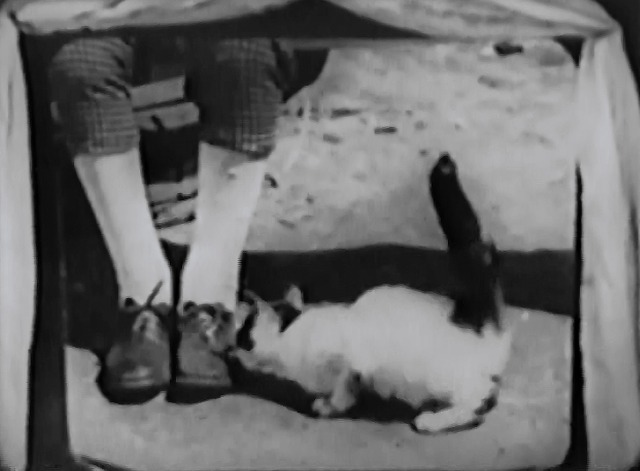 Our Gang - The Big Show - black and white cat licks at goose grease on shoes