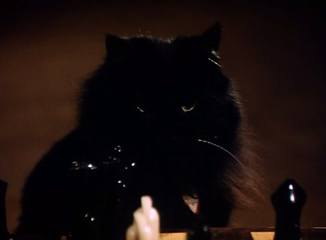 The Big Turnaround - long-haired black cat Archibald looking at chess board
