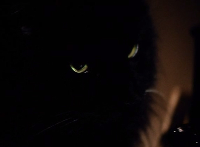 The Big Turnaround - extreme close up of long-haired black cat Archibald