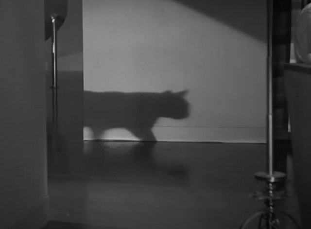 The Black Cat 1934 - cat's shadow on wall