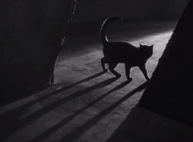 The Black Cat 1934 - black cat and shadow in dark doorway