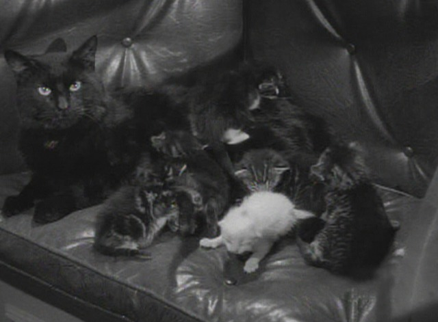 The Black Cat 1941 black cat with kittens