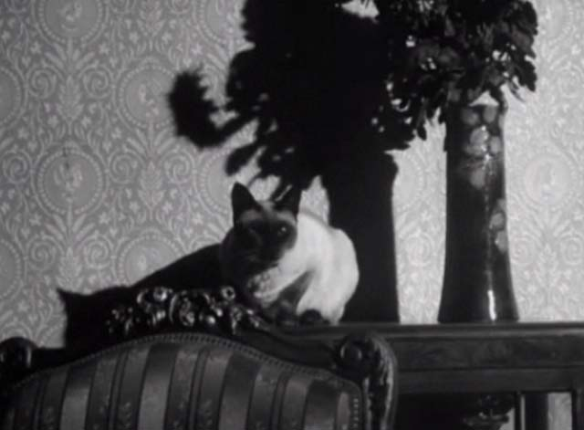 Bluebeard's Ten Honeymoons - Siamese cat sitting on table