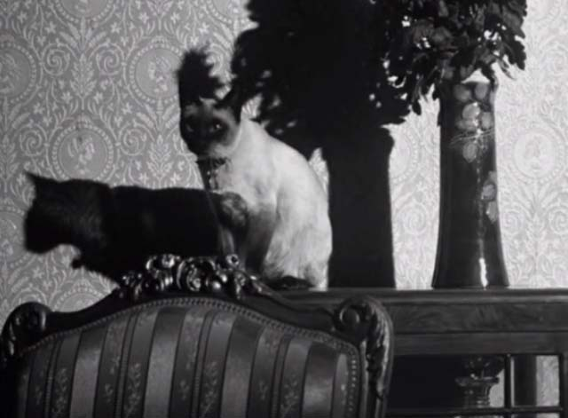 Bluebeard's Ten Honeymoons - Siamese cat sitting up on table