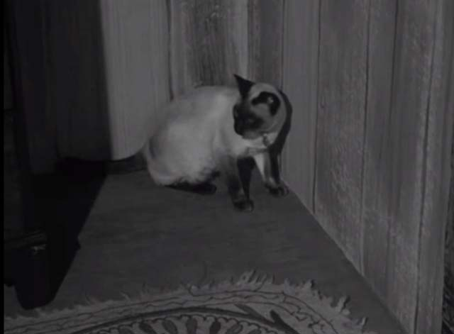 Bluebeard's Ten Honeymoons - Siamese cat sitting in corner