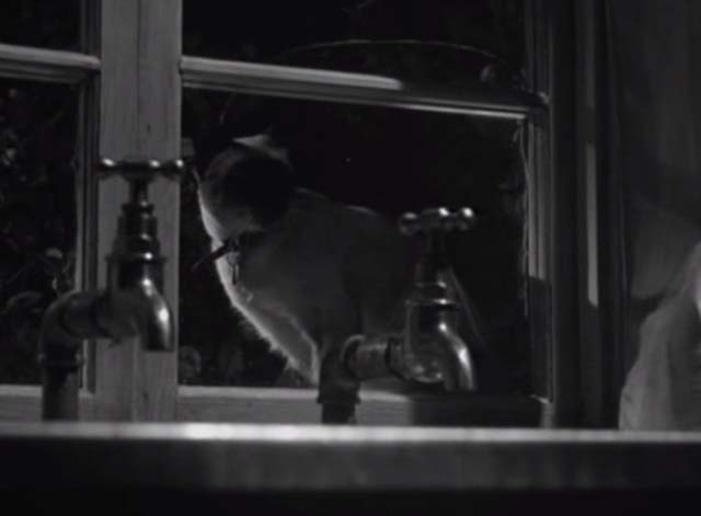 Bluebeard's Ten Honeymoons - Siamese cat Max sitting in window