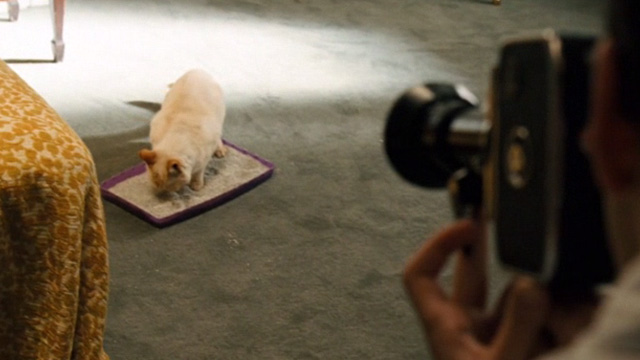 Bobby - flame point Siamese cat being filmed in litter box