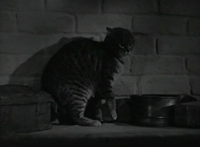 The Body Snatcher - scared tabby cat Brother