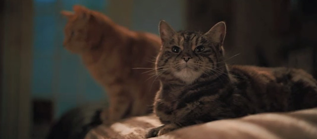 Bohemian Rhapsody - grey tabby and ginger tabby sitting on bed
