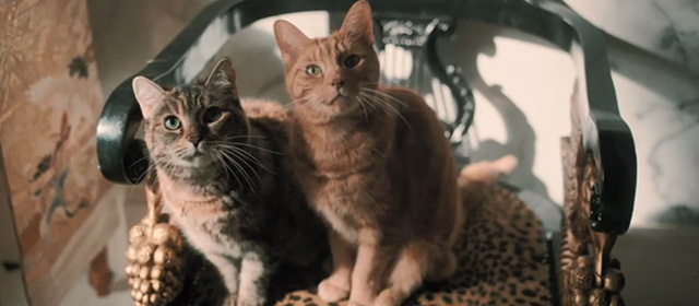Bohemian Rhapsody - grey and ginger tabby cats sitting on chair looking up