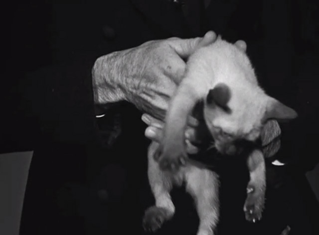The Boogie Man Will Get You - Siamese kitten being held