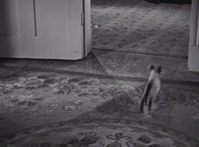The Boogie Man Will Get You - Siamese kitten running out of room