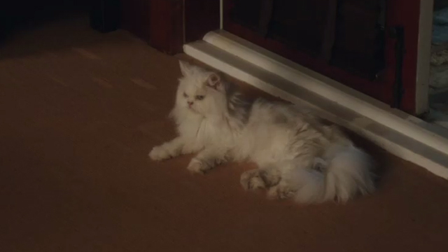 Book Club - white Persian cat Ginsburg lying next to doorway