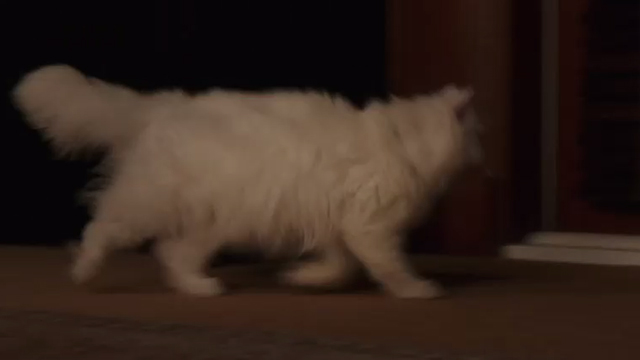 Book Club - white Persian cat Ginsburg scurrying to door