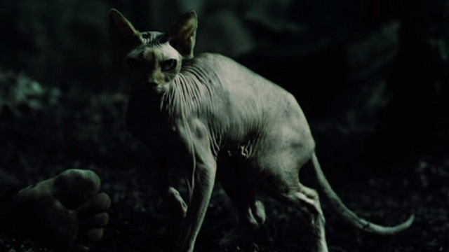 The Book of Eli - hairless cat standing in forest