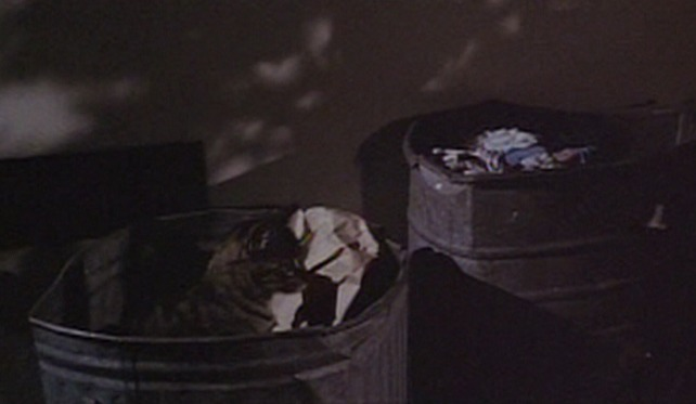 The Born Losers - tabby cat in garbage can