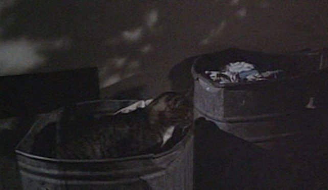 The Born Losers - tabby cat prepares to jump out of garbage can