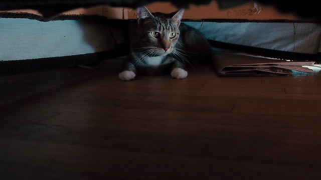 The Bounty Hunter - tabby cat hiding beneath chair