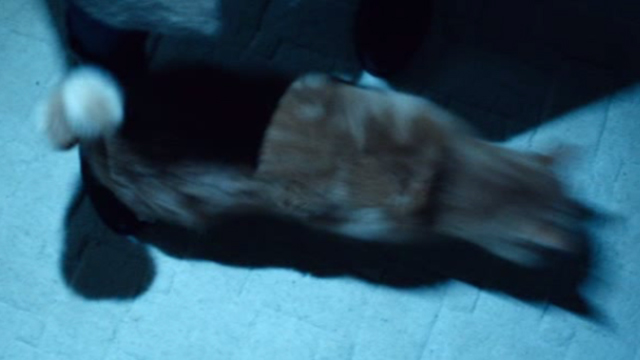 The Boy Next Door - cat Dexter jumping across foot
