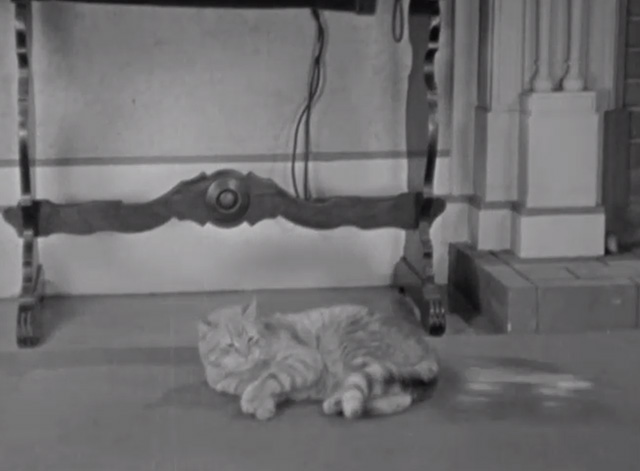 Brats - tabby cat lying on floor with roller skate approaching