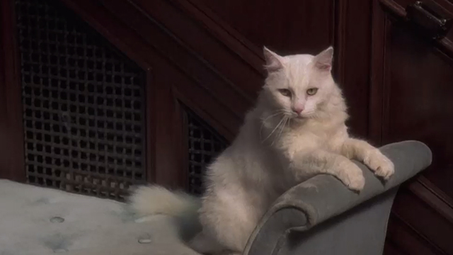 Breakin' 2: Electric Boogaloo - white cat on couch