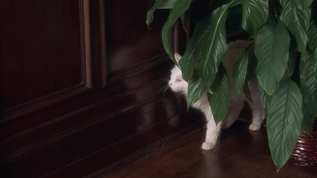 Breakin' 2: Electric Boogaloo - white cat behind potted plant