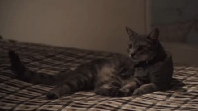 Breaking Away - tabby cat Fellini Jake sitting on bed