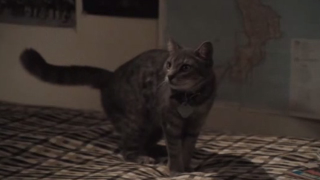 Breaking Away - tabby cat Fellini Jake standing on bed